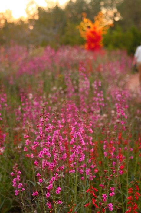 photoblog image Spring flowers